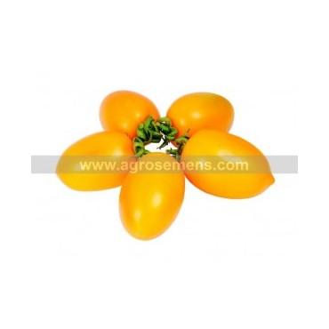 Tomate tétons de vénus jaune